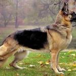 Até mesmo os cães foram capazes de perceber a presença real de Nosso Senhor Jesus Cristo no Santíssimo Sacramento